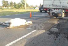 Photo of Un camión embistió un caballo en la autopista Santa Fe – Rosario