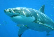 Photo of Aparecieron tiburones en la costa de Monte Hermoso