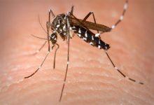 Photo of Alto riesgo de epidemia de dengue en Santa Fe y la región