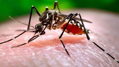 Photo of Confirman el primer caso de dengue en la ciudad