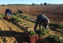 Photo of RENATRE Santa Fe Sur intercambió alcances de la pandemia en empleo rural