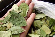 Photo of Autorizan a Jujuy y Salta a distribuir más de 800 kilos de hojas de coca incautados