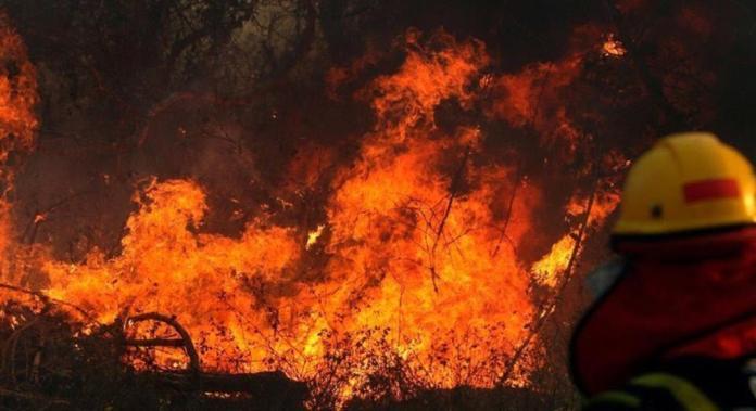 Photo of Guardaparques se sumarán al combate de los incendios