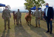 Photo of El gobierno jujeño entregó 20 llamas al Ejército