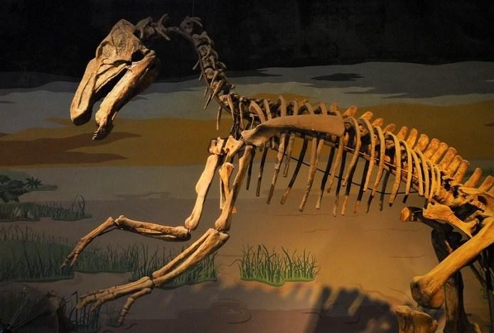 Photo of Reabrió el Museo de Ciencias Naturales de Mar del Plata