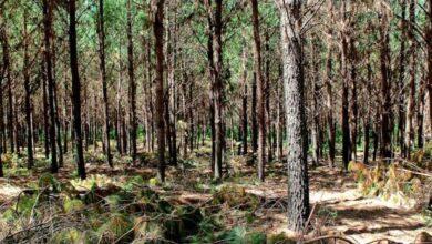Photo of Santa Fe incorporó más de siete mil hectáreas nuevas de bosques nativos
